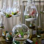 Tendințe moderne în amenajarea spațiilor cu plante și ghivece