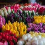 Aranjamente florale pentru ocazii speciale