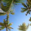 Palmieri tropicali