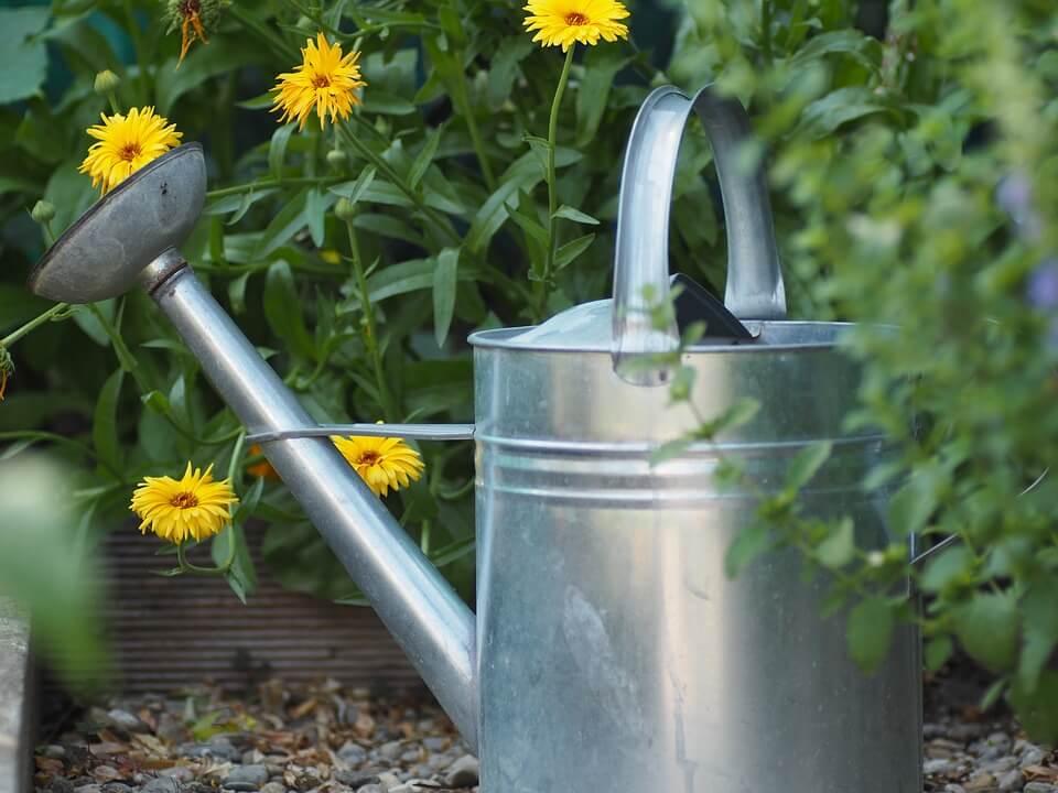 Flori galbene în grădină