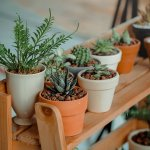 5 sfaturi de îngrijire a plantelor de interior, în sezonul cald