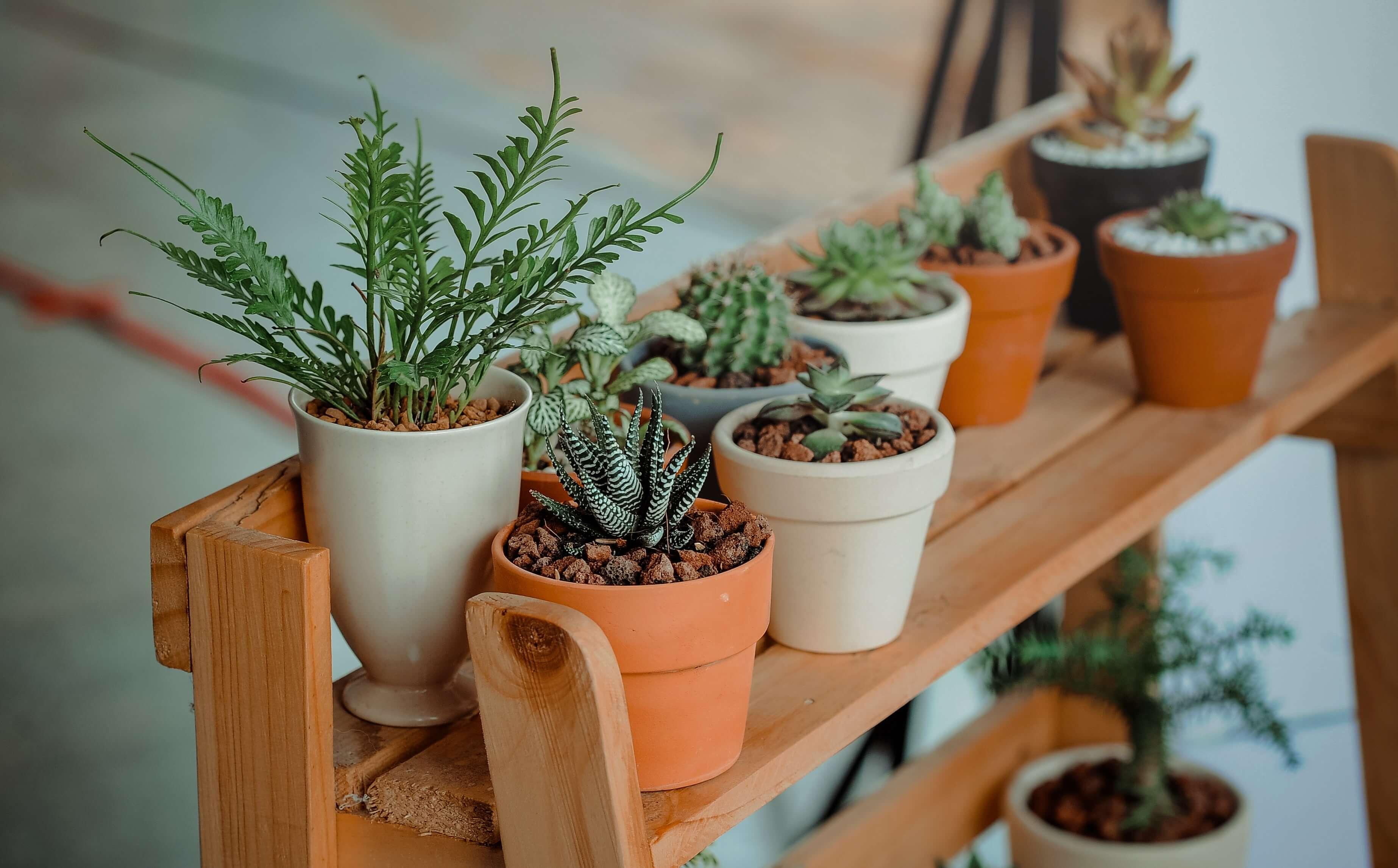 Plante mici