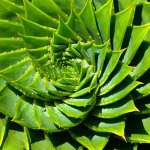 Totul despre Aloe Vera: îngrijire, specii, beneficii și ce anume o face specială