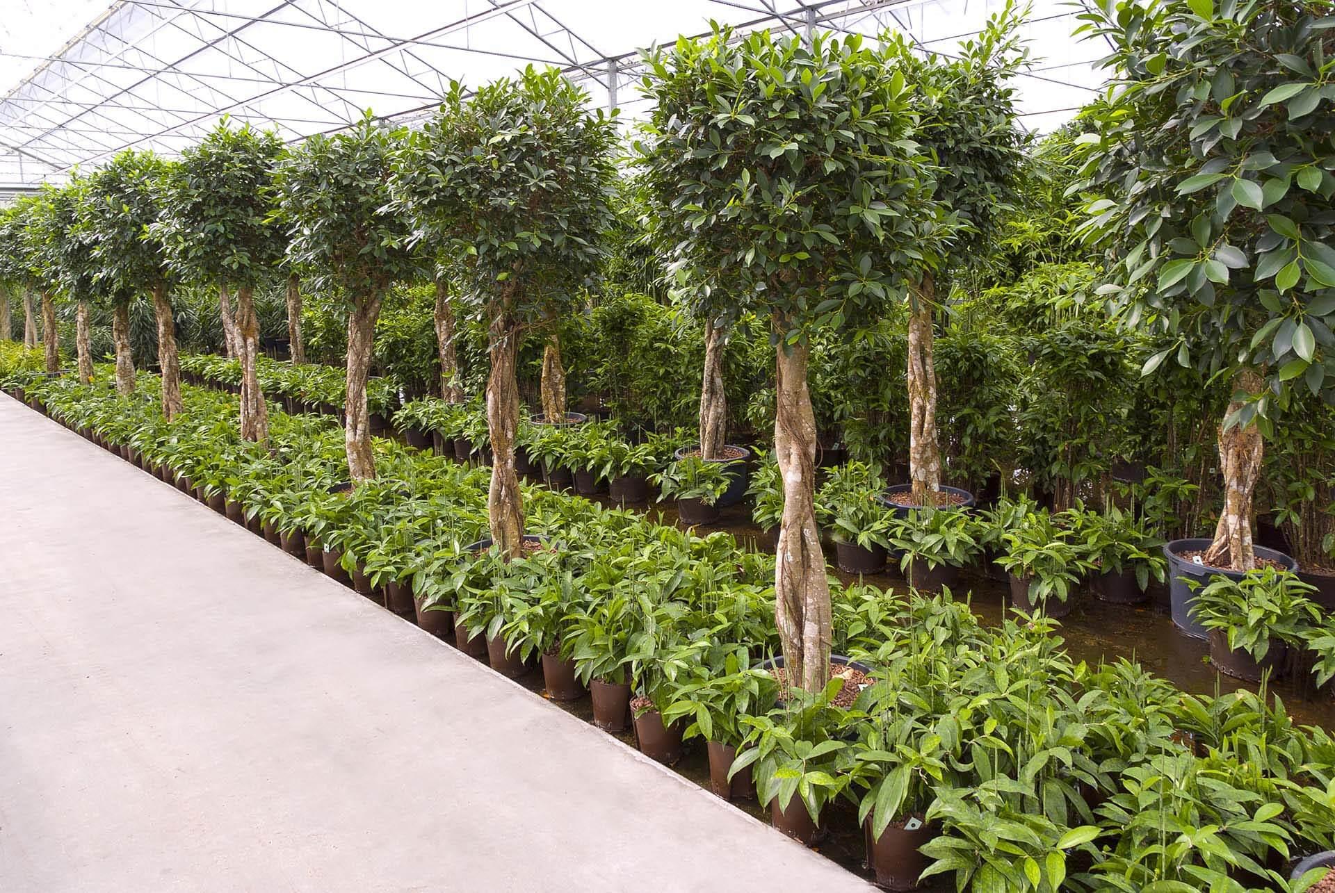Plante crescute în hidrogranule